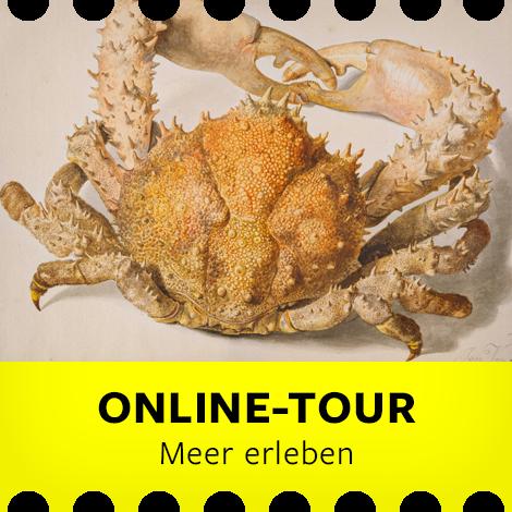 Online-Tour für Familien: Meer erleben